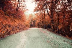 Beautiful forest road in autumn colors. Mountain path with autumn scenic trees and colors royalty free stock images