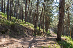 Beautiful forest road . Royalty Free Stock Photography