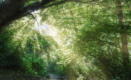 Beautiful forest road . Royalty Free Stock Photo