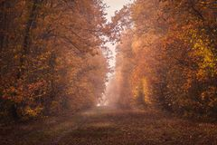 Beautiful forest road scene in the morning with some fog. In the autumn season Royalty Free Stock Photography