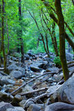 Beautiful forest scene with creek, rocks, and wate. Forest scene in Yosemite National Park, CA Stock Photos