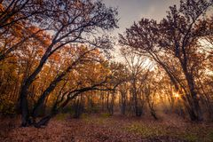 Beautiful forest scene in the morning with some fog. And sun rising in the autumn Royalty Free Stock Images