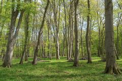Beautiful forest scenery. Amazing landscape. Royalty Free Stock Images
