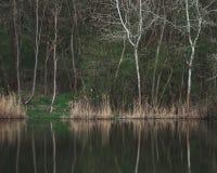Beautiful forest scenery. Amazing landscape. Stock Photos