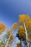 Beautiful Forest Scenery And Autumn Foliage Royalty Free Stock Images