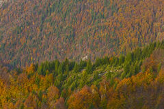 Beautiful forest scenery and autumn foliage Royalty Free Stock Photography