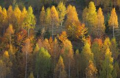 Beautiful forest scenery and autumn foliage Royalty Free Stock Photos