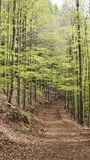 A path through the forest in serra da estrela stock images