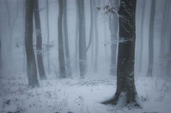 Beautiful forest with snow and fog in winter stock image