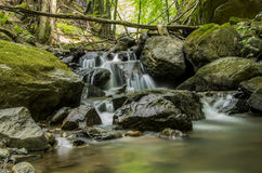 Beautiful forest spring. From the mountains of Romania Stock Photos