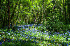 Beautiful forest on a spring time stock photo