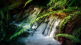 Beautiful Forest Stream stock video footage