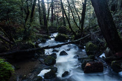 Beautiful Forest and Stream Royalty Free Stock Photography