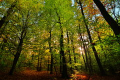 Beautiful forest with sunlights and path in autumn Royalty Free Stock Photography