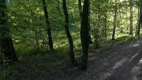 Beautiful Forest On A Sunny Day. Russia. Moscow stock video footage