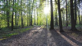 Beautiful forest at sunny day. Two people walk away.  stock footage