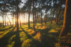 Beautiful forest with sunshine. At the sunset stock photos
