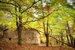 Beautiful forest surrounding an old house Royalty Free Stock Images
