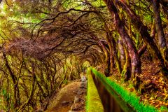 Beautiful forest trail in the mountains, along levada 25 Fontes. E Risco , surrounded by laurisilva. Madeira Island Royalty Free Stock Image