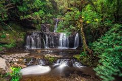 Beautiful forest tree. Beautiful waterfall in Catlins forest, New Zealand stock images