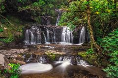Beautiful forest tree. Beautiful waterfall in Catlins forest, New Zealand stock photography