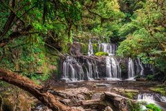 Beautiful forest tree. Beautiful waterfall in Catlins forest, New Zealand royalty free stock images