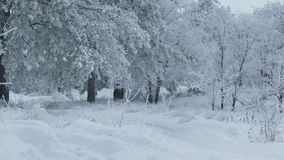 Beautiful forest of trees nature in the snow winter christmas stock video footage