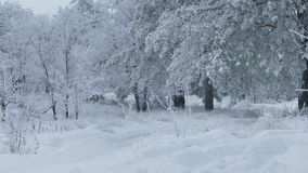 Beautiful forest of trees the snow nature winter stock video