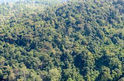 Forest from viewpoint in Phu Hin Rong Kla National Park Stock Image