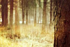 Fantastic wood on a warm spring day. Beautiful forest on a warm spring day royalty free stock images