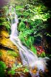 Beautiful forest waterfall Royalty Free Stock Photos