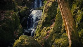 Beautiful Forest Waterfall In The Evening. Pretty woodland scene of small waterfall and tree trunk in golden evening light stock video