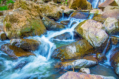 Beautiful forest waterfall. on the stony slope runs stormy forest waterfall. Royalty Free Stock Photo