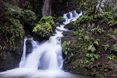Beautiful Forest and Waterfall Stock Photography