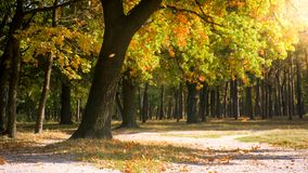 Beautiful forest in windy sunny autumn day. Beautiful forest in windy sunny fall day stock images