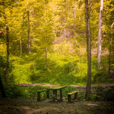 Beautiful forest and wooden bench along the pathway Stock Photo
