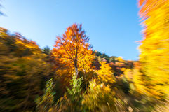 Beautiful forest with zooming effect. In National Park Ceahlau, Romania Stock Image