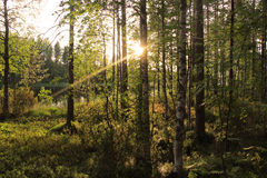 Beautiful forests of Finland Stock Photo