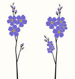 Beautiful forget-me-not flowers Royalty Free Stock Image