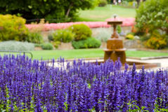 Beautiful Formal Garden. With lavender in foreground, photographed with shallow DOF Royalty Free Stock Image