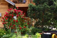 Beautiful formal garden close up photo Stock Image