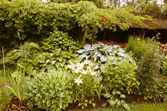Beautiful formal garden close up photo Stock Images