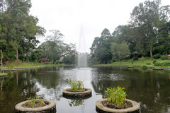 Beautiful fountain in lake : Cibodas botanical garden in Puncak.  royalty free stock photo