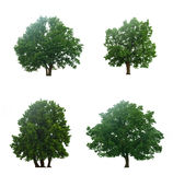 Beautiful four green trees stock photography