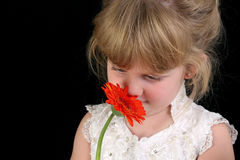 Beautiful Four Year Old Girl Smelling Flower Against Black Background stock images