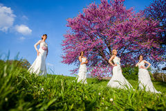 Beautiful four young brides together Royalty Free Stock Photography