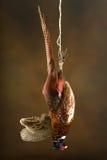 Beautiful fowl Stock Images