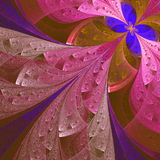 Beautiful fractal flower in blue and pink. Computer generated gr Stock Photo