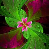 Beautiful fractal flower in green and pink. Computer generated g Stock Images