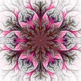 Beautiful fractal flower in pink and gray. Royalty Free Stock Images